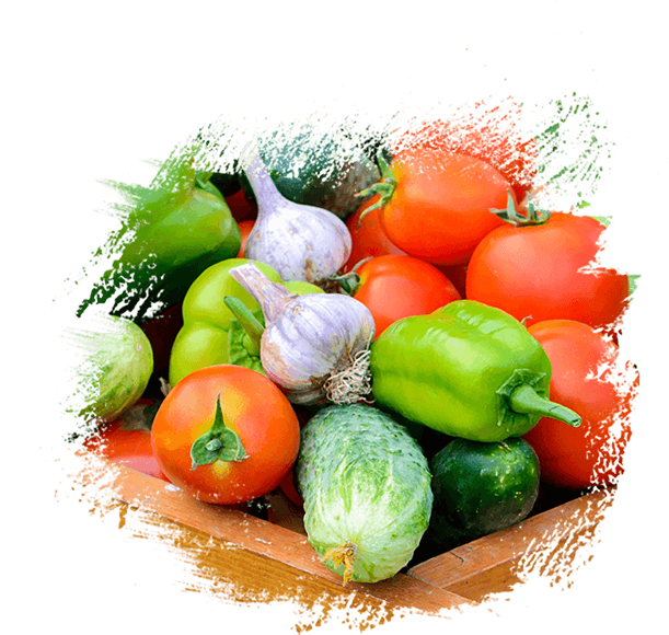 cr export – Sri Lanka's largest exporter of fresh fruits and